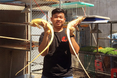 Trai 97 nuôi cả trăm con 'quái vật' thú cưng rồng Nam Mỹ ở An Giang
