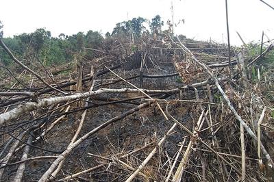 Phó chủ tịch xã 'hô biến' 2,5ha rừng phòng hộ để trồng keo