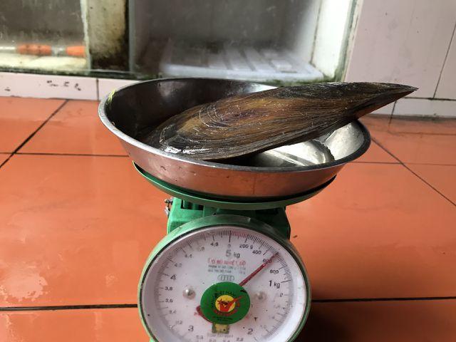 Quảng Ninh: Con sò to hơn bàn tay, khách muốn ăn cũng phải chờ