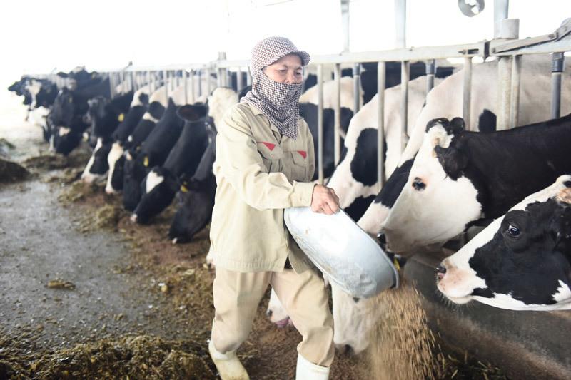 Chọn sữa tươi chuẩn Hà Lan để mẹ nhẹ nỗi lo