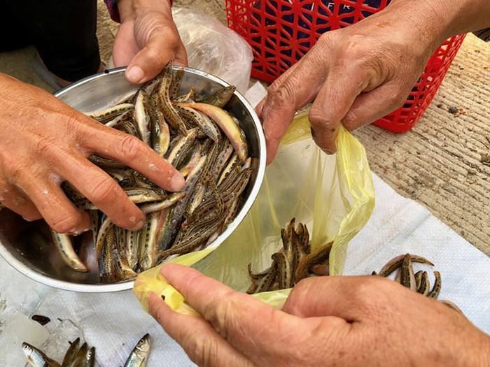 Tứ 'độc' đặc sản cá cực hiếm ở miền núi, có tiền cũng khó mua
