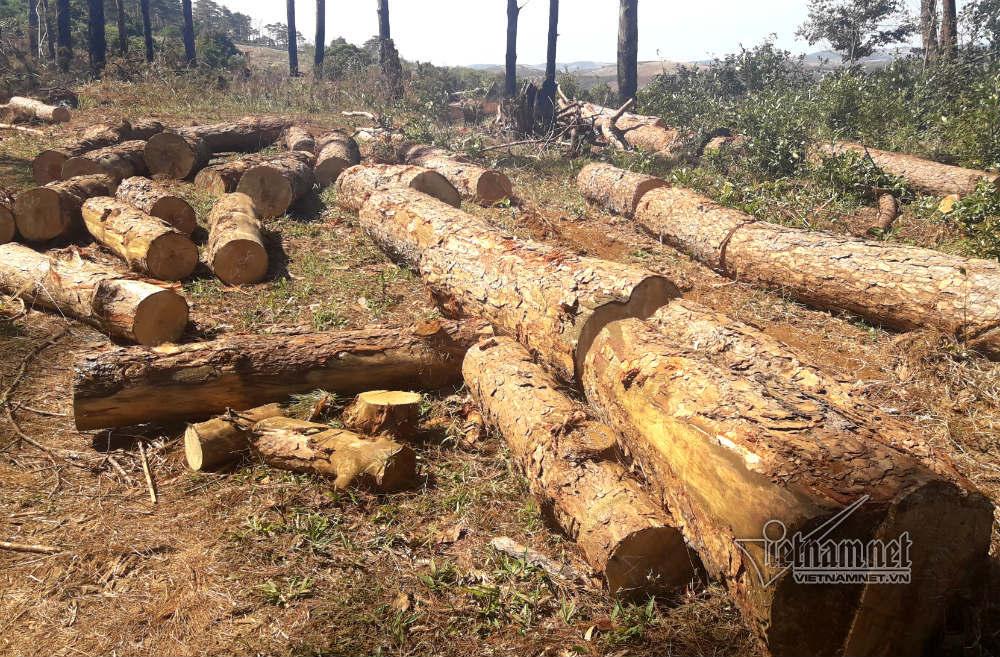 phá rừng,Đắk Nông,nhận hối lộ