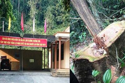Rừng gỗ quý lại bị tàn sát ở Quảng Bình