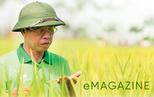 11 hạt gạo và gia tài chục ngàn tỷ của 'con' Báo đồng bằng
