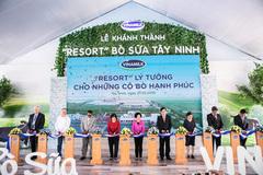 Resort đặc biệt của bò sữa ở Tây Ninh