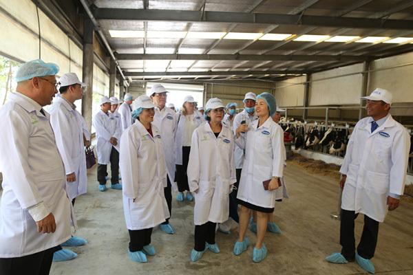 chăn nuôi bò sữa,chuẩn global gap,công nghệ chăn nuôi 4.0