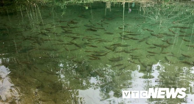 Kỳ bí Sơn La: Suối nước trong vắt, cá kéo đến đen kịt