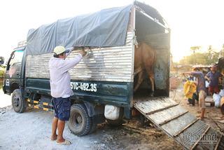 Xin thức ăn thừa, anh nông dân kiếm tiền tỷ giữa khu đất vàng Sài Gòn