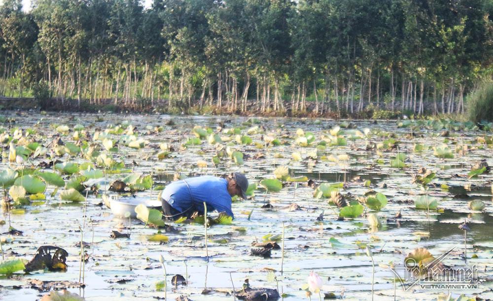 Mang nửa tỷ đi loanh quanh khu đất vàng, anh trai Sài Gòn kiếm lời trăm triệu