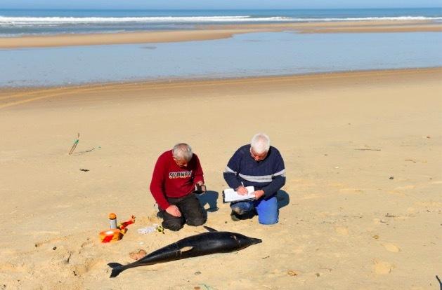 Bí ẩn cảnh tượng rùng mình trên bãi biển Pháp