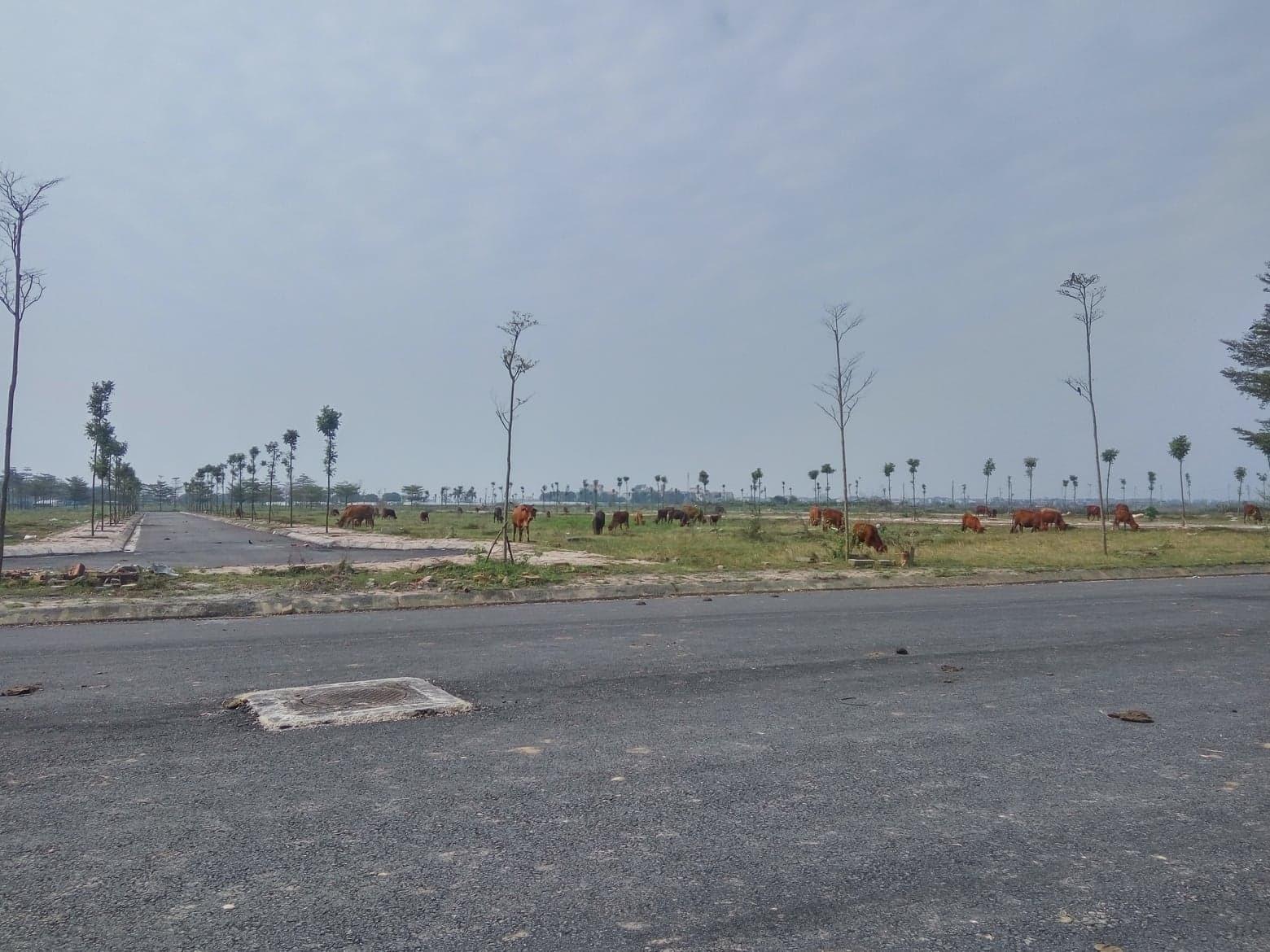Thủ tướng 'lệnh' kiểm tra 2.000ha đất dự án bỏ hoang, Mê Linh họp khẩn
