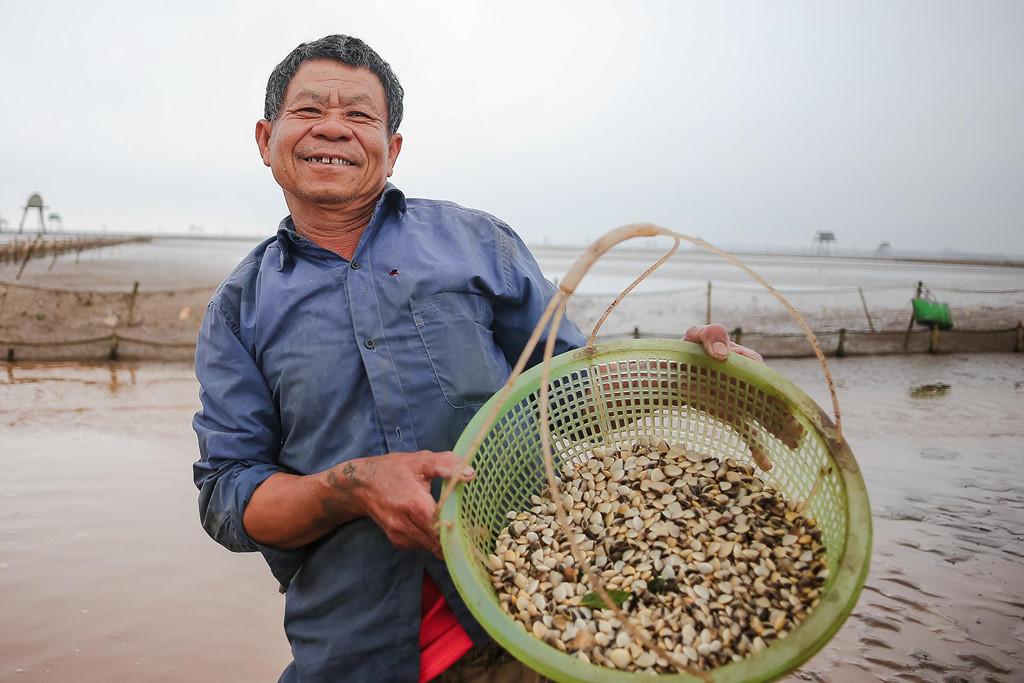 Nuôi ngao,nông dân làm giàu,Thái Bình