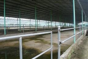 Dự án nuôi bò nghìn tỷ khiến ông Trần Duy Tùng vướng lao lý