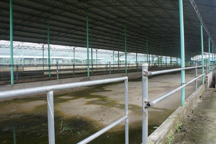Trần Bắc Hà,nuôi bò,dự án nghìn tỷ