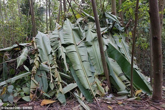 Đôi bạn sụt 20 kg sau 3 tuần sống như 'Tazan' trong rừng rậm