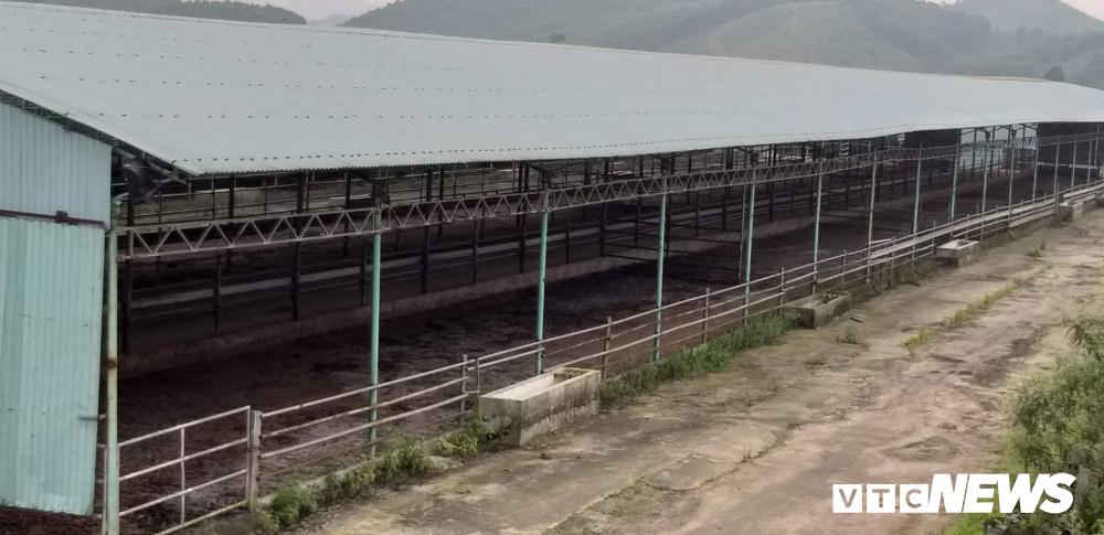 Đàn bò hơn 40.000 con khiến cha con ông Trần Bắc Hà bị bắt giờ ở đâu?