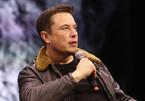 Elon Musk dùng auto-tune đọc rap tưởng nhớ khỉ đột