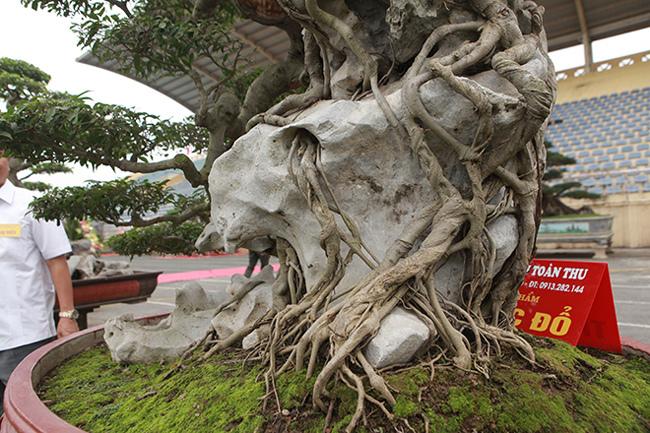 Kiệt tác sanh cổ 'thác đổ ngồi đá' hiếm có của đại gia Phú Thọ