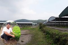 Trại bò nghìn tỷ khiến cha con Trần Bắc Hà bị bắt, dân ào vào chiếm đất