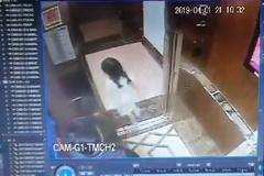 Người đàn ông sàm sỡ bé gái trong thang máy ở Sài Gòn