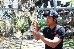 Lâm Đồng: Hotboy bán lan rừng online thu cả tỷ đồng