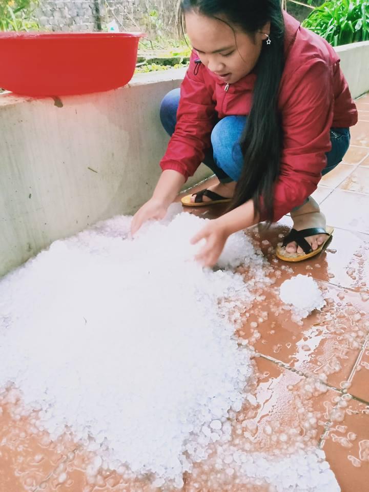 Mưa đá bất ngờ, mận và mơ rụng trắng gốc cây ở Mộc Châu