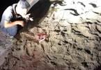 Bé trai 7 tuổi bị đàn chó cắn chết: Công an vào cuộc điều tra