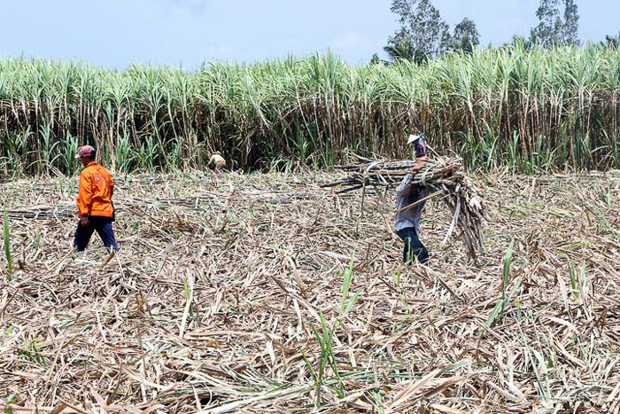 1m2 thu ròng 3 triệu: Bộ trưởng Nông nghiệp hiến kế làm giàu cho dân