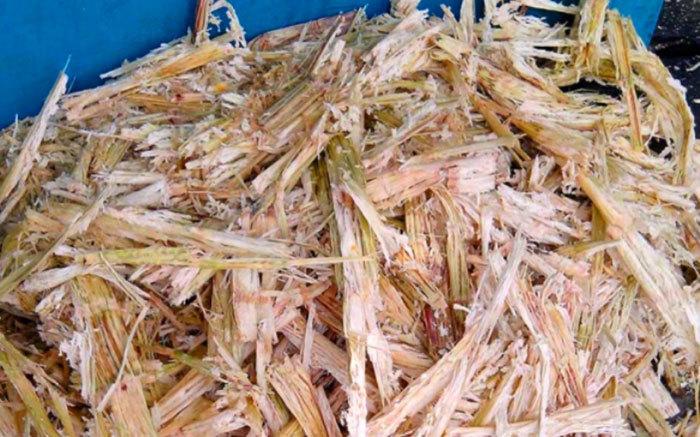 Bộ NN-PTNT,ngành mía đường,trồng nấm,Bộ trưởng Nguyễn Xuân Cường