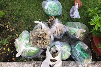 Du khách bẻ 9 túi san hô ở Côn Đảo mang về gây bức xúc