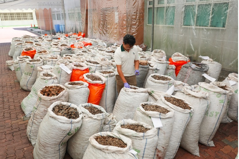 Singapore bắt lô hàng vảy tê tê đang chuyển về VN trị giá 895 tỷ