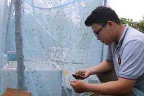Làm giàu khác người: Cử nhân về quê nuôi...ruồi