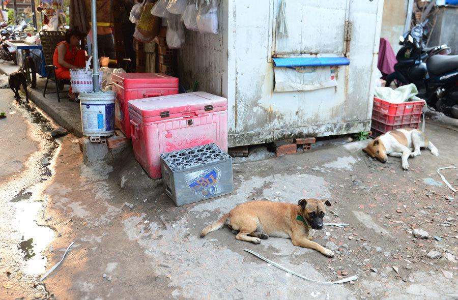 chó cắn,chó dại,Sài Gòn