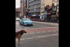 Hành động của chú chó thông minh khiến nhiều người xấu hổ