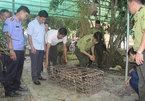 Vu Quang National Park receives rare monkey