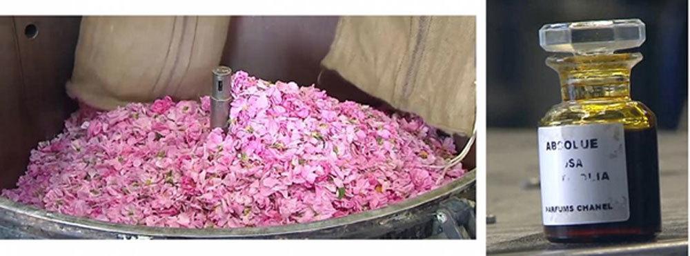 nước hoa,sản xuất nước hoa,Chanel No 5