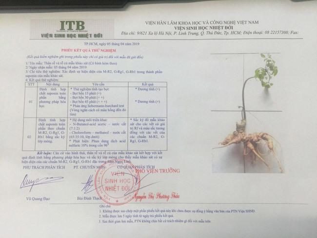 Đại gia chi tiền mua củ sâm Ngọc Linh 25 năm tuổi, giá 500 triệu đồng