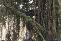 Đi ăn trộm bị truy đuổi, nam thanh niên trèo lên cây cố thủ