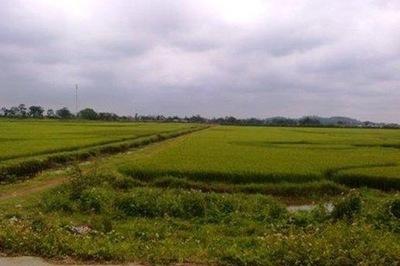 Nữ sinh Nghệ An bị kẻ lạ mặt khống chế hãm hiếp trên đường đi học