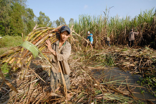 VN sugar association seeks help amid bankruptcy fears