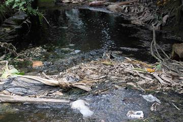 Người dân 'TP đáng sống' khốn khổ vì dòng nước đen ngòm, hôi thối