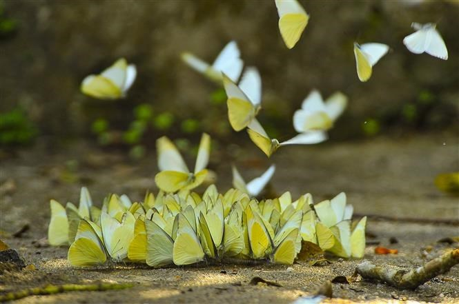 Butterflies in Cuc Phuong national park