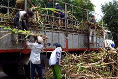 Sugar companies in danger of going bankrupt