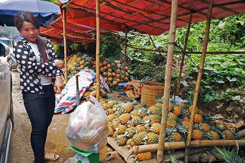 Pineapples dumped following halt to Chinese exports
