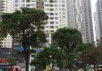 PM requests investigation into rampant construction in Hanoi