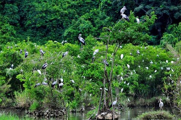 Natural Thung Nham Bird Park a site for bird lovers