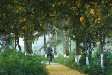 Chất lượng không khí tại Ecopark sánh ngang châu Âu
