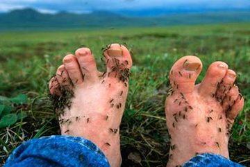 Thành phố kỳ lạ dạy trẻ phải yêu thương muỗi