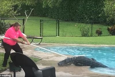 Ngủ dậy thấy cá sấu dài ngoẵng trong bể bơi