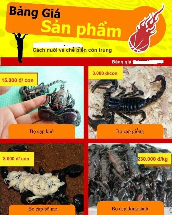 Thực hư thông tin 'đặc sản' bọ cạp đen chữa được bệnh ung thư